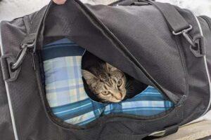 gatto dentro la borsa