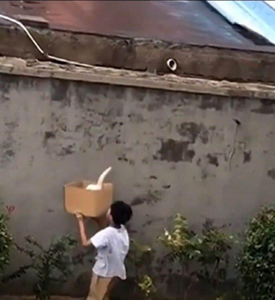bimbo salva un gattino