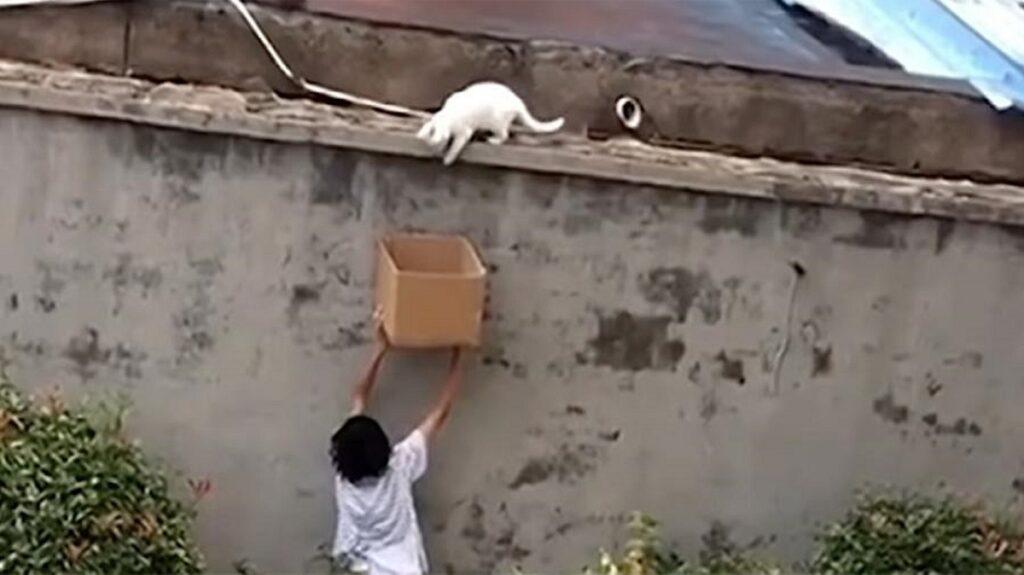 storia del salvataggio di un gattino