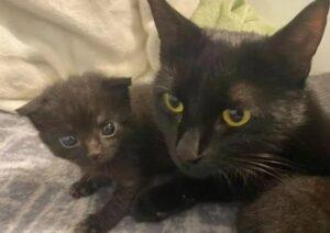 gattino e nuova famiglia