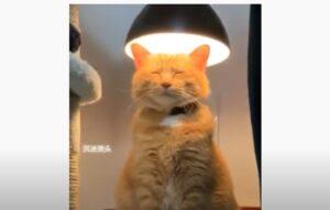gatto e lampada