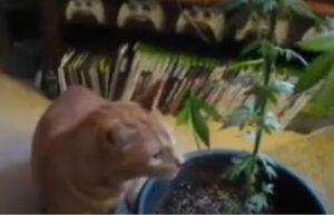 gatto e pianta