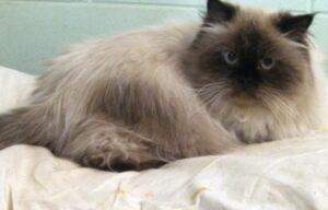 gatto sul lettino