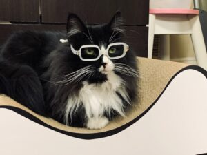 gatto prof