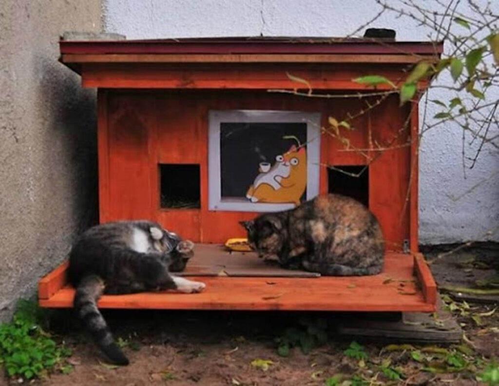 gatti seduti in cuccia