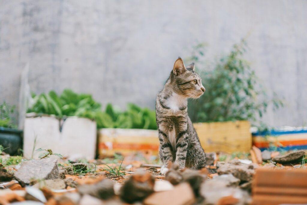 gattino smarrito