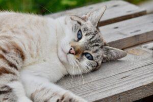 gatto grigio sdraiato a terra