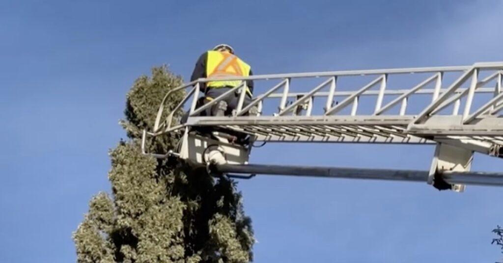 pompieri salvano un gatto bloccato su un albero