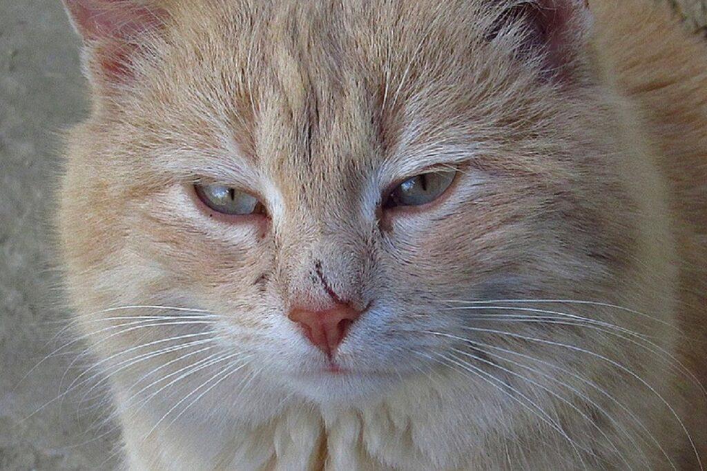 gatto col segno di un morso