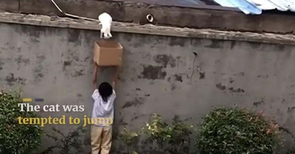 gatto bloccato sopra un muro salvato da un bimbo