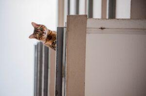 gatto si sporge dal terrazzo