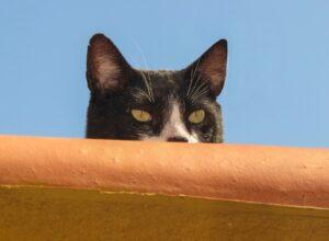 gatto dietro le tegole