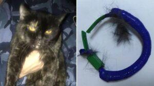 gatto porta marijuana nel collare