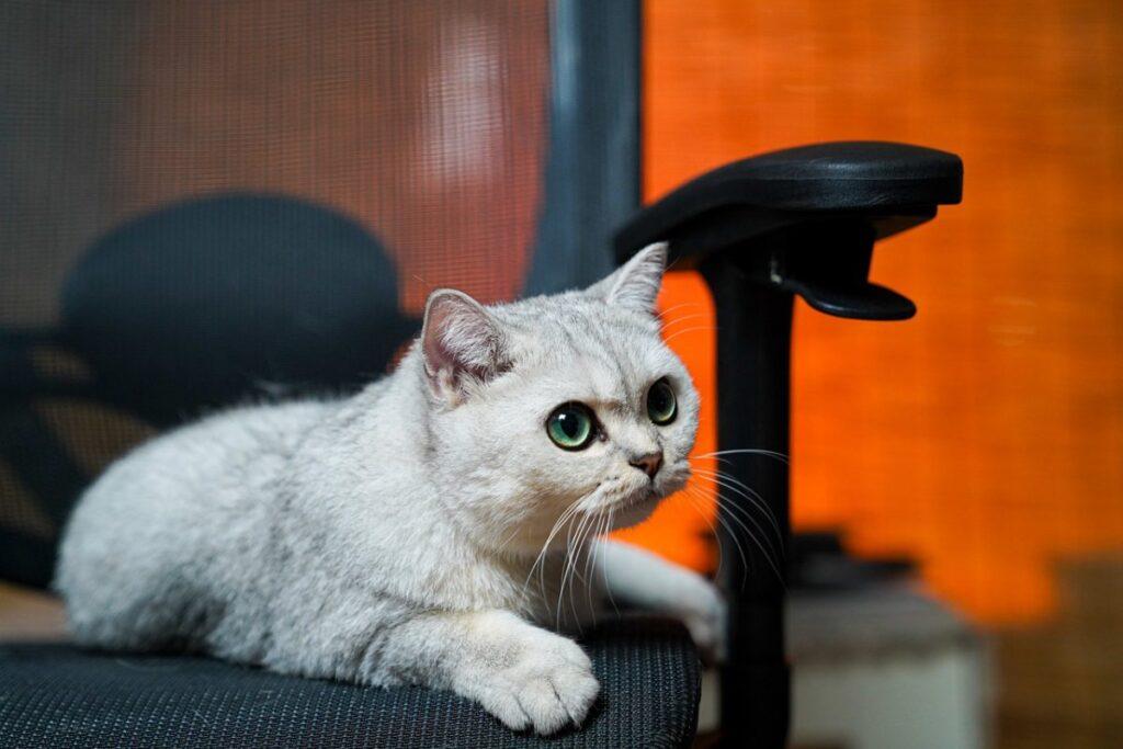 gatto su una sedia
