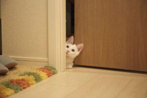gatto fuori da una stanza