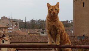 gatto scomparso a causa di sua curiosità