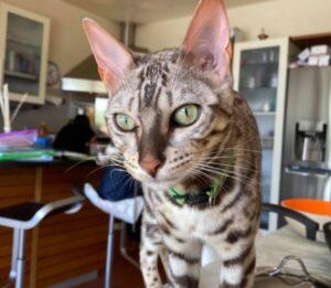 avvistato varie volte gatto gin