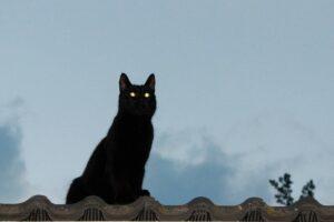 gatto nero sul tetto