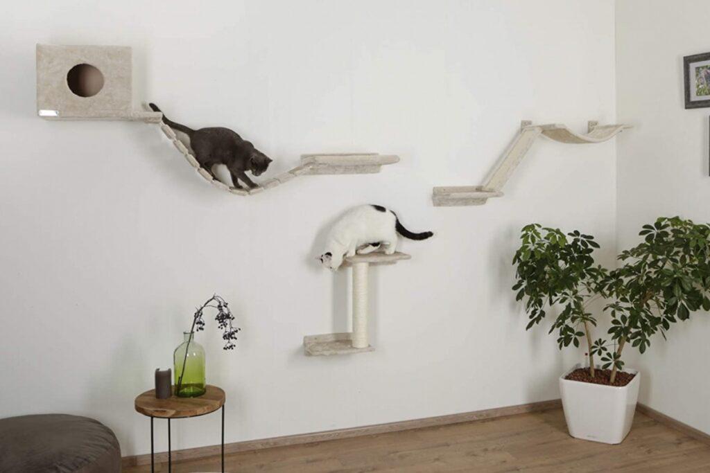 palestra per gatti