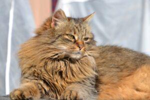 gatto con il pelo grasso