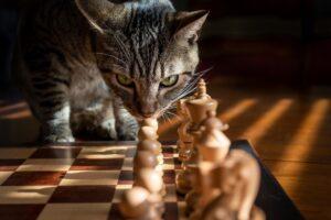 gatto si diverte