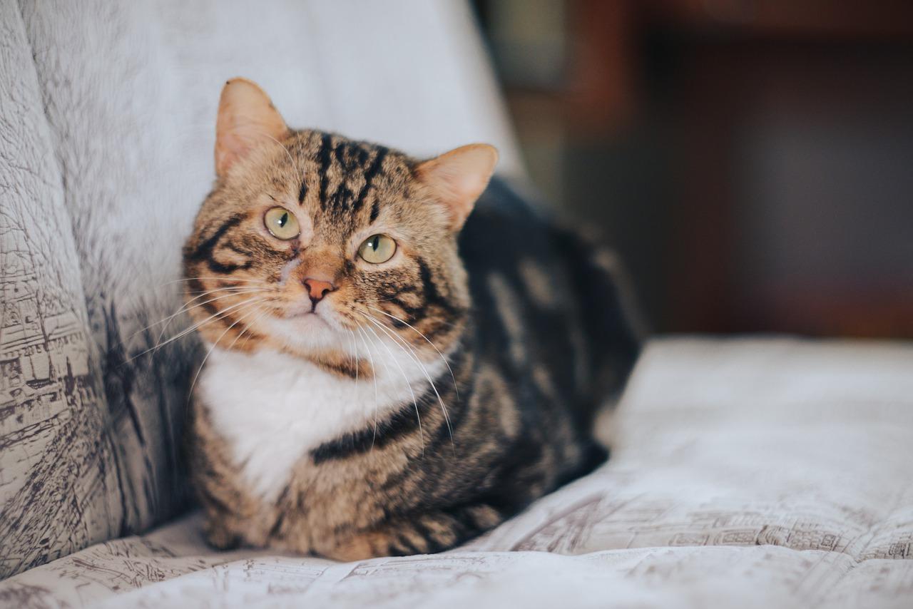 gatto dallo sguardo incerto