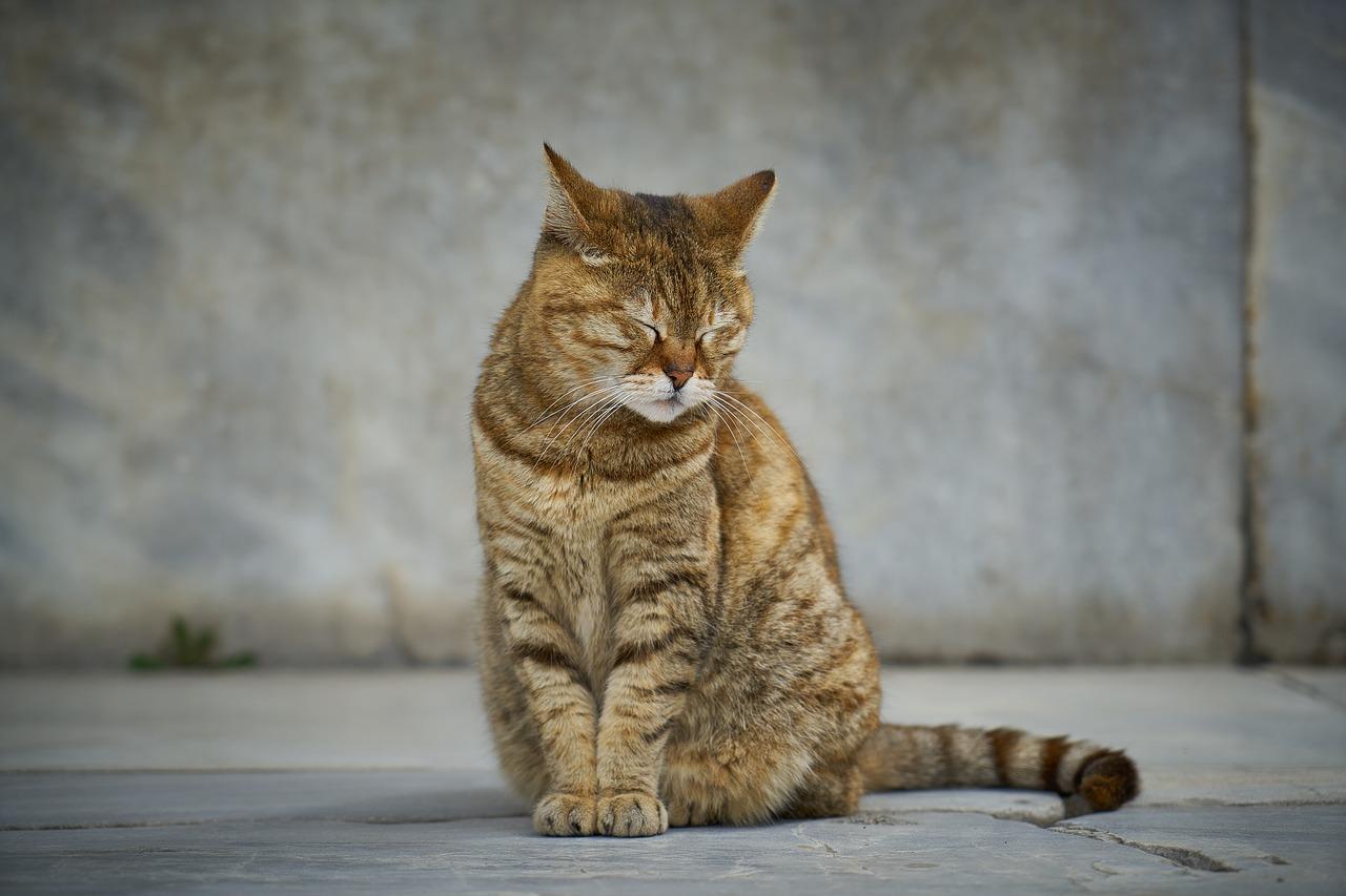 gatto sembra triste
