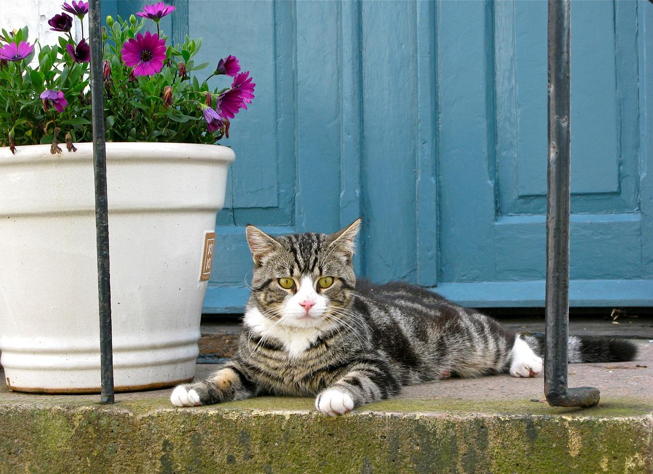 gatto davanti casa