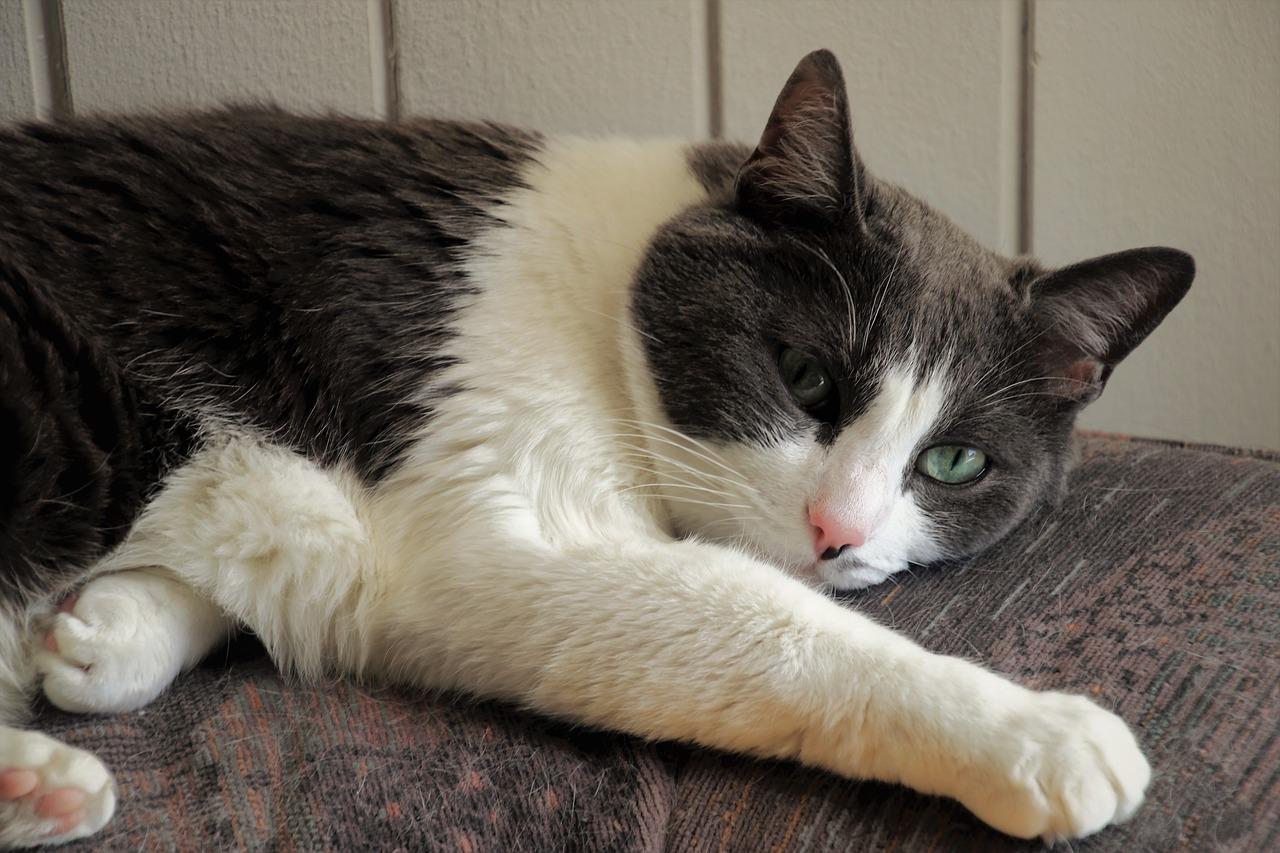 gatto non molto felice
