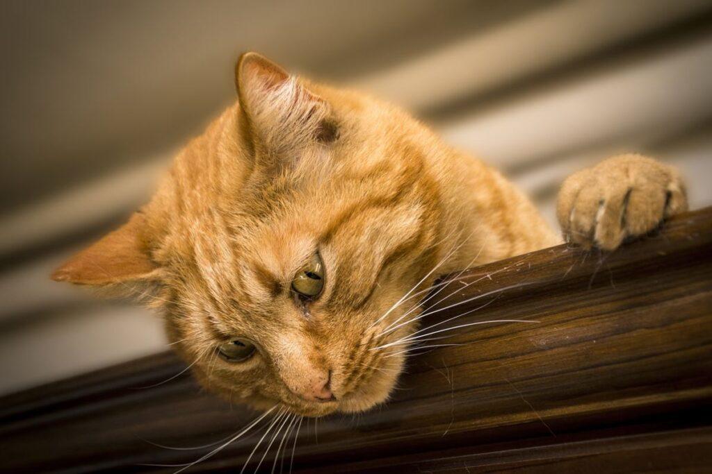 gatto su un armadio