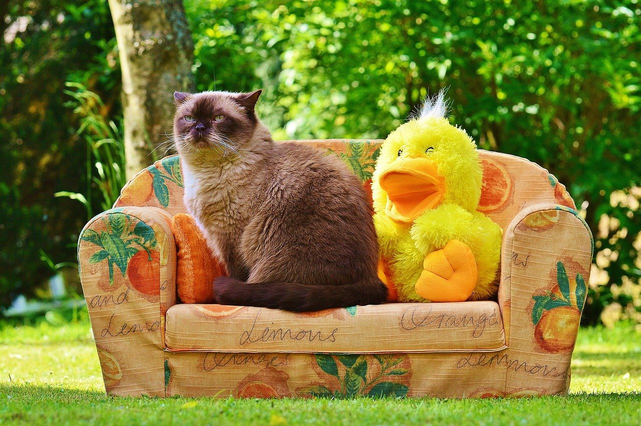 gatto su divano con peluche