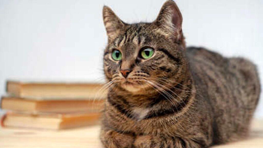 reginaldo gatto ritrovato nel seggio elettorale