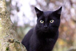 gatto nero sull'albero