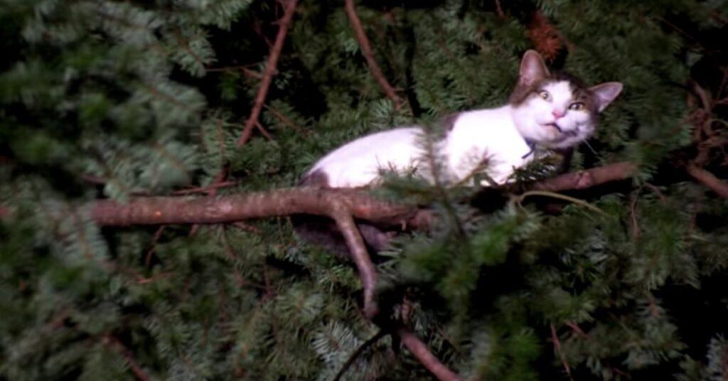 gatto bianco e grigio bloccato su un albero
