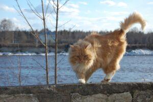 gatto rosso vicino al fiume