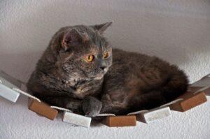 gatto grigio su una sorta di amaca