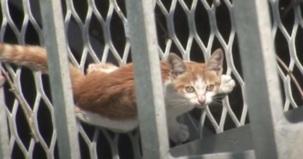 gatto intrappolato in una rete