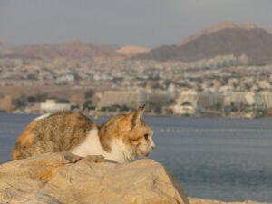 gatto rosso e grigio sugli scogli