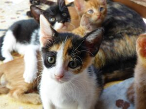 gattini piccoli