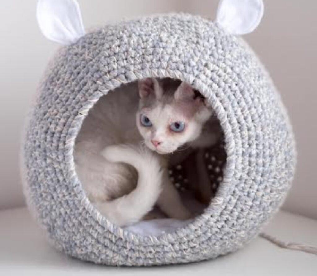 gatto foto dentro cuccia