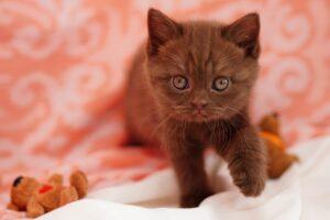 gattino con i peluche