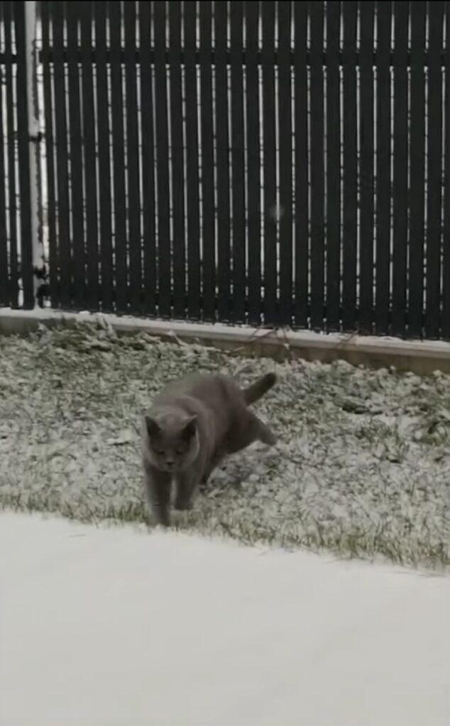 simpatico gatto vede la neve per la prima volta