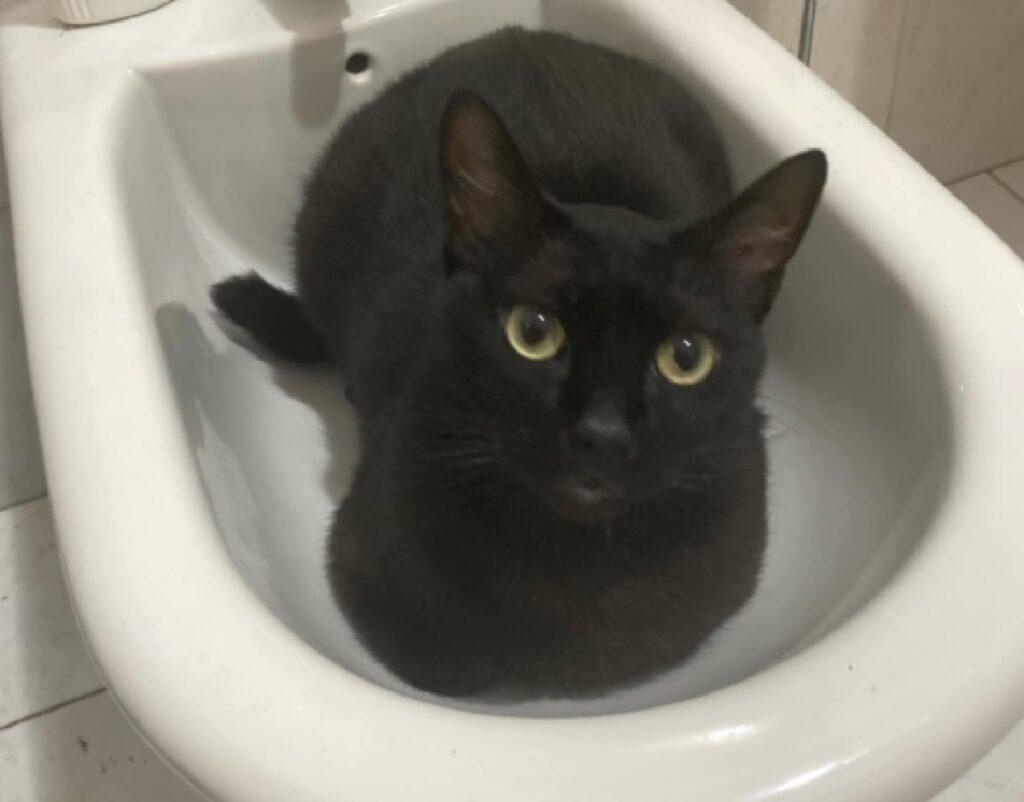 gatto nero dentro bidè