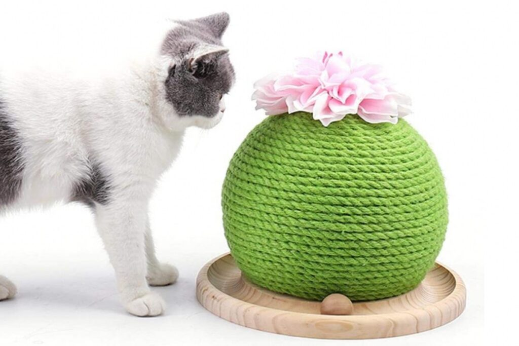 tiragraffi cactus piccolo
