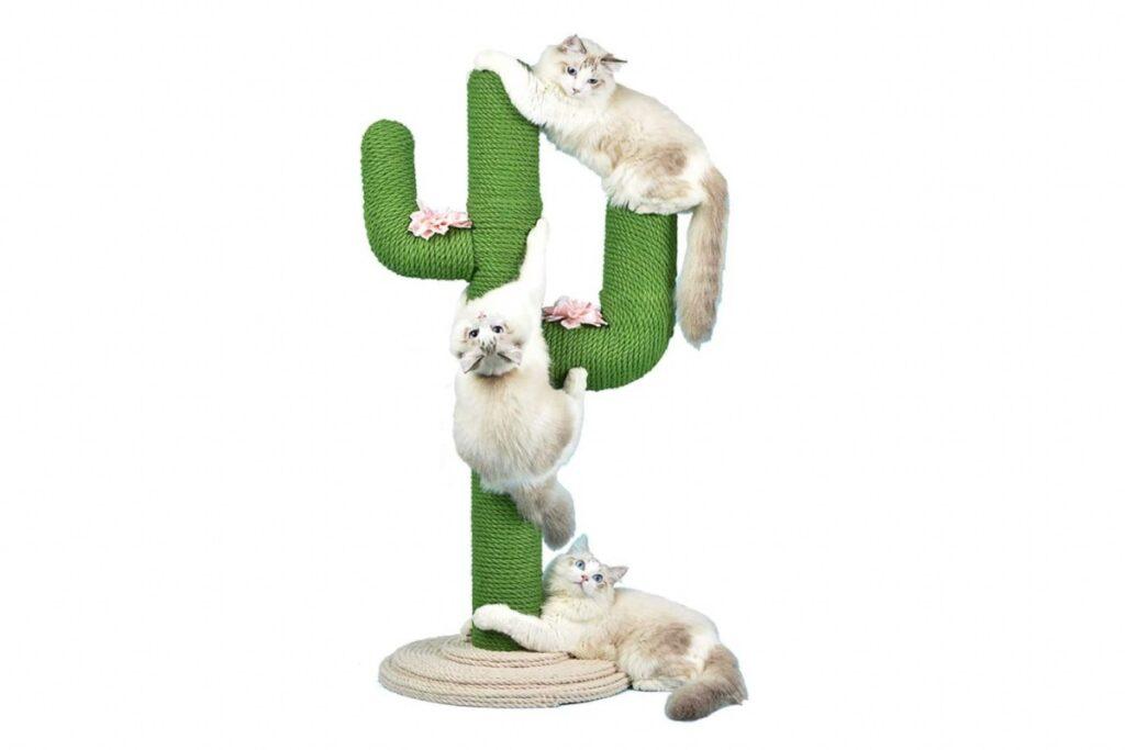 albero tiragraffi cactus