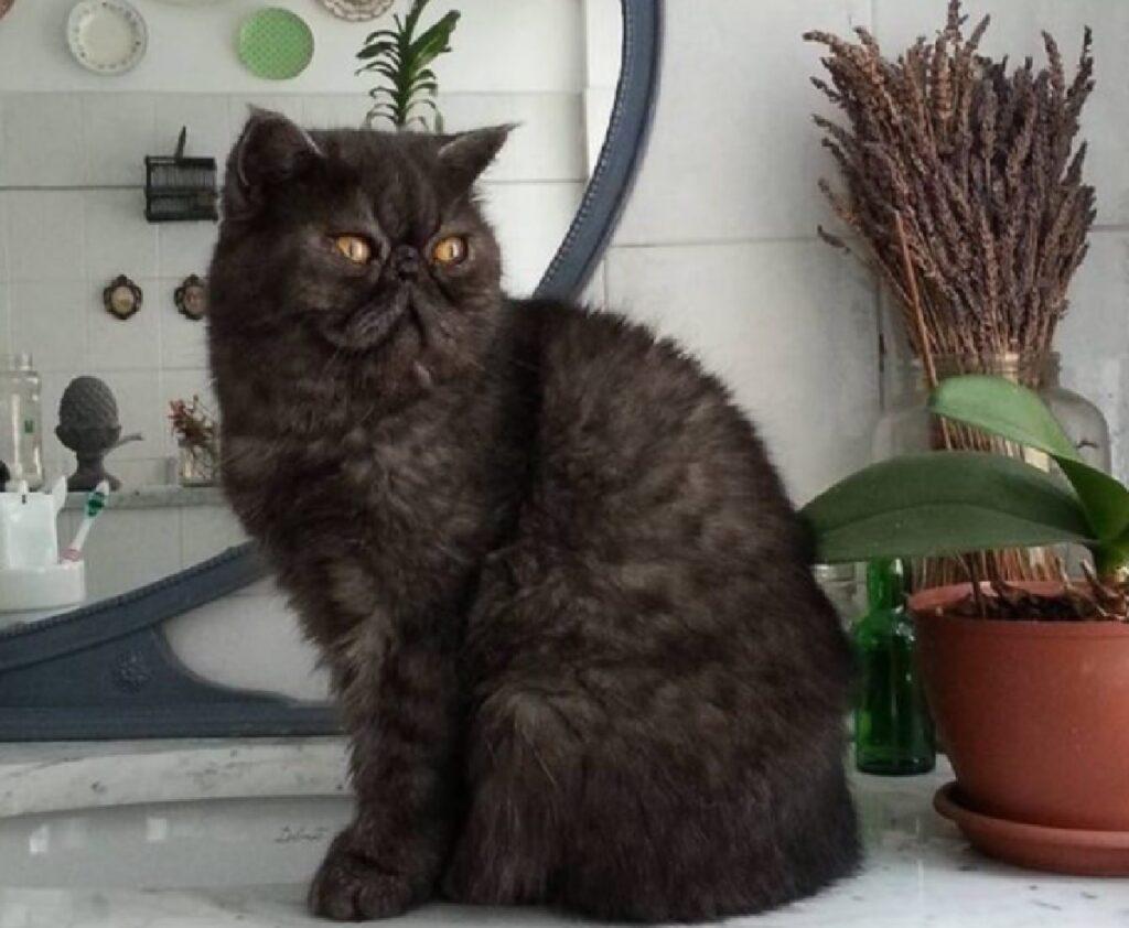 gatto gedeone sul bancone cucina